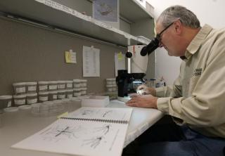 Mosquito Identification